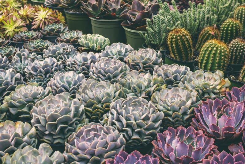 Diversas variedades de plantas carnudas e de cactos foto de stock royalty free