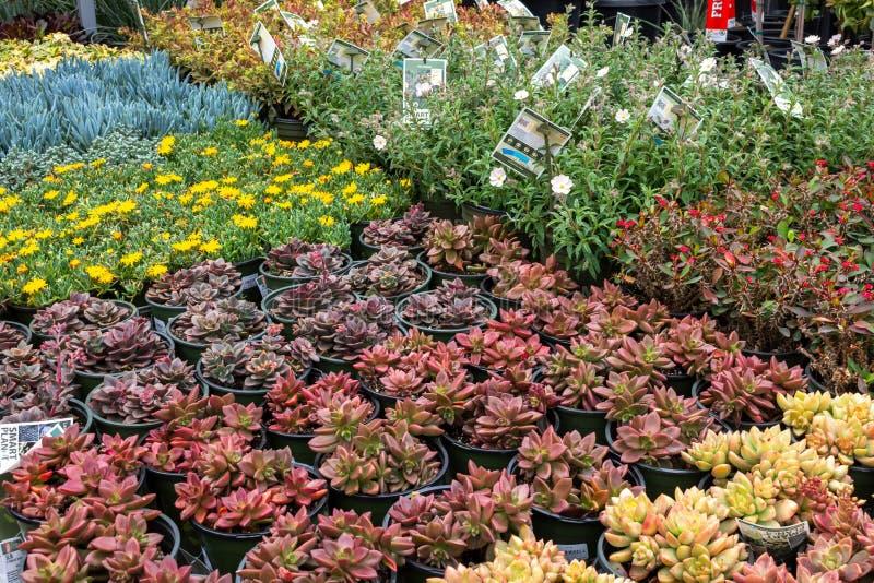 Diversas variedades de plantas carnudas e de flores foto de stock royalty free