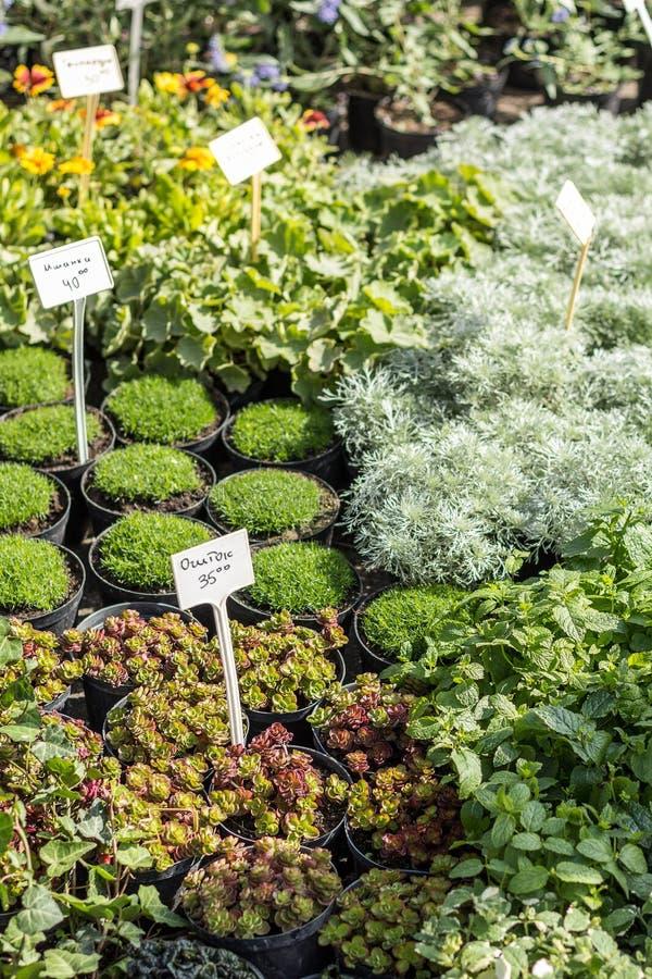 Diversas variedades de plantas en potes en un mercado bot?nico imagen de archivo