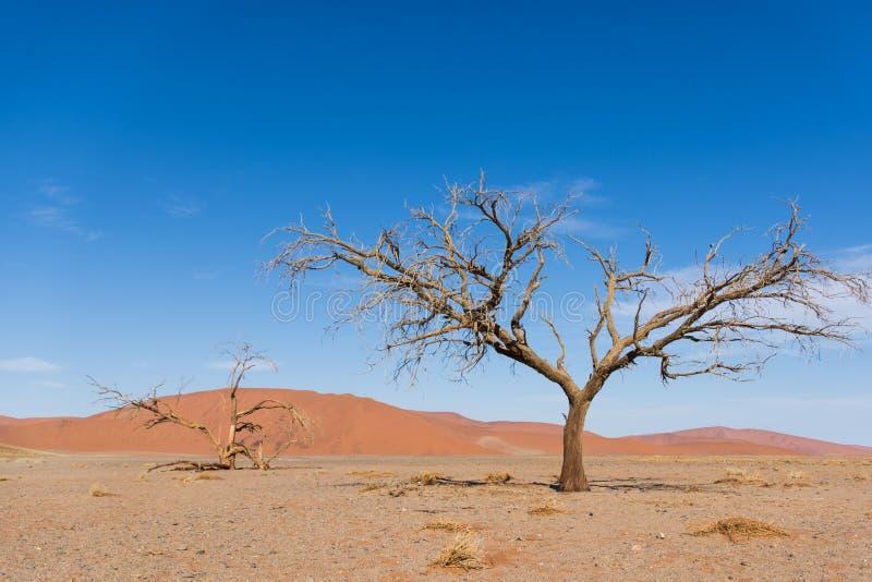 Diversas vistas de la duna 45 en el desierto de Namib foto de archivo