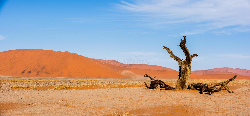 Diversas vistas de la duna 45 en el desierto de Namib foto de archivo libre de regalías