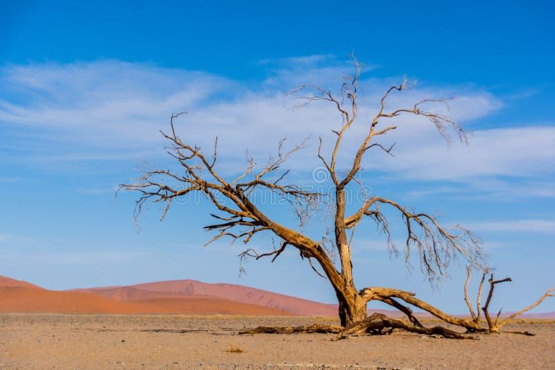 Diversas vistas de la duna 45 en el desierto de Namib fotografía de archivo