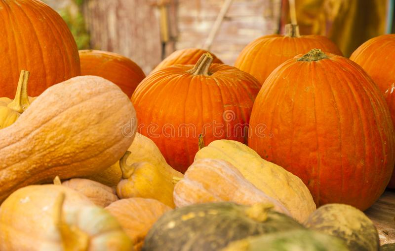 Diverse assortment of pumpkins royalty free stock image