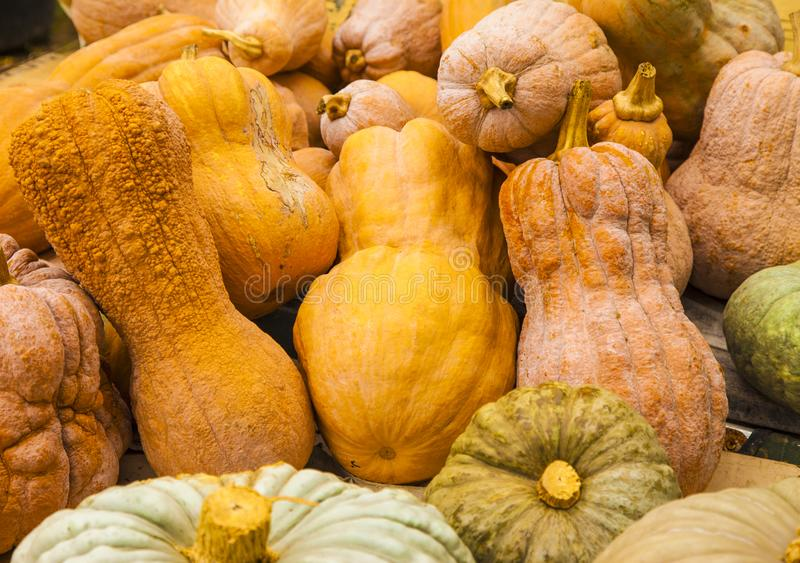 Diverse assortment of pumpkins stock photography