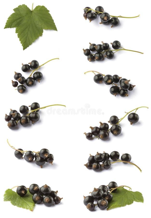Diverse blackcurrant royalty-vrije stock afbeelding