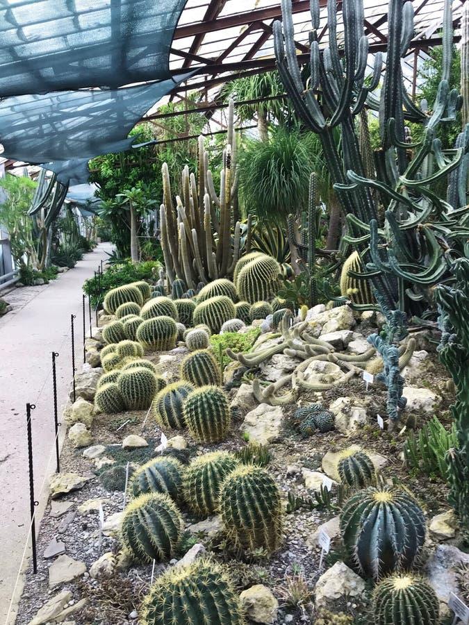 Diverse cactus in een glasserre voor bescherming in de Serre en de Botanische Tuin stock afbeelding
