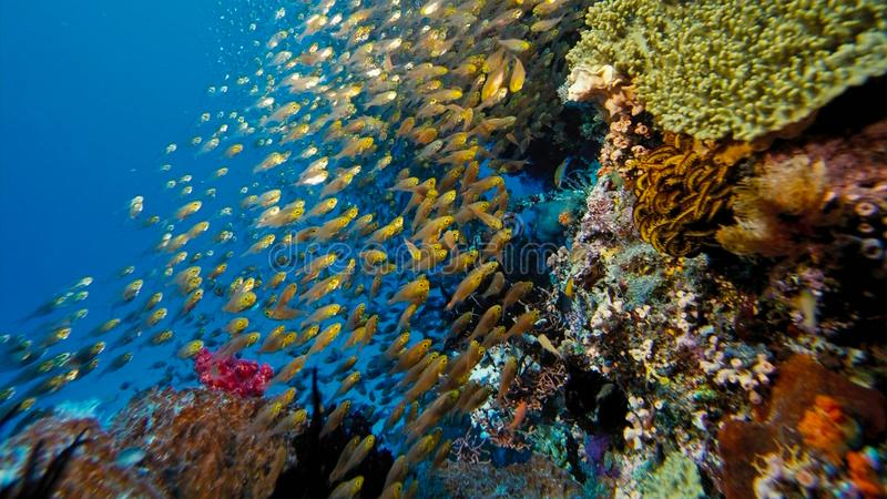 A diverse coral reef, with crinoids and soft corals, Papua Niugini, Indonesia. This area is high in marine biodiversity stock image
