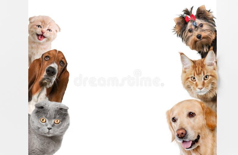 Diverse die katten en honden als kader op wit wordt geïsoleerd royalty-vrije stock afbeeldingen