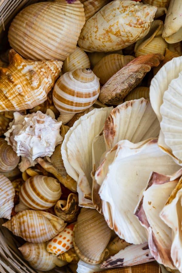Diverse Exotische Zeester, Zeeschelp en Cockleshells Opgestapelde Togethe stock fotografie