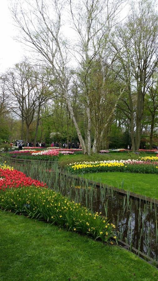 Diverse flowers around a pond in Keukenhof Netherlands royalty free stock image