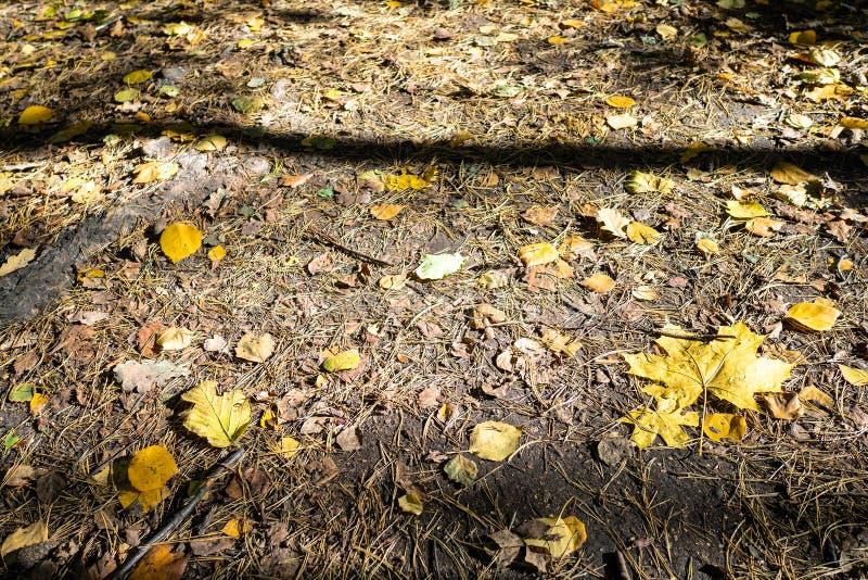 diverse gevallen bladeren op oppervlakte van grond stock fotografie