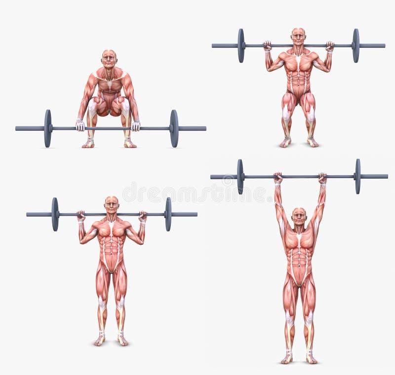 Diverse gewichtheffen/het bodybuilding houdingen vector illustratie