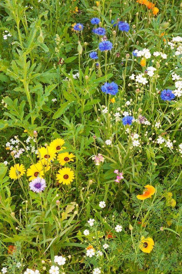 Diverse grassen komen prachtig op een weide tot bloei stock afbeeldingen