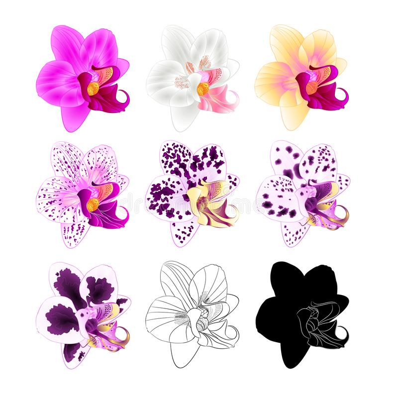 Diverse kleuren van orchideephalaenopsis natuurlijk, overzicht, silhouet, bloem vijfde op een witte uitstekende vector editable i royalty-vrije illustratie