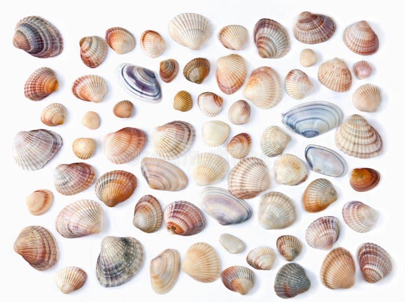 Diverse kleurenshell die op wit wordt geïsoleerdd stock foto's