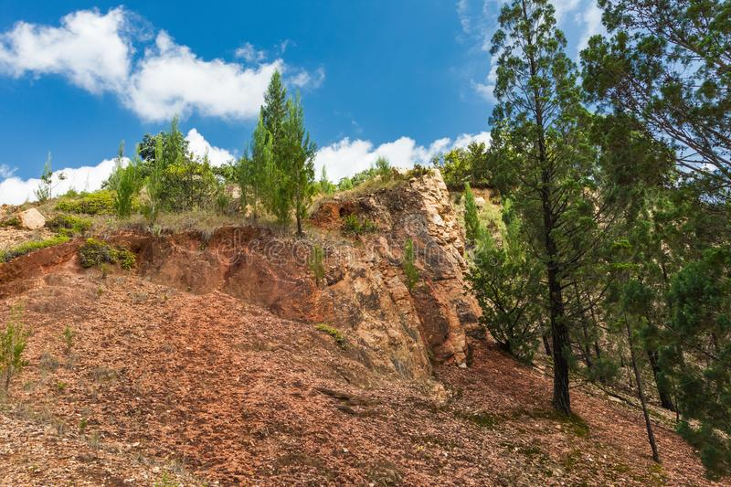 The diverse landscapes of Kenya. Pines on the rocks of Kakamega Forest. Africa. The diverse landscapes of Kenya. Pines on the rocks of Kakamega Forest. East stock photography