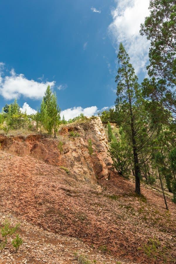 The diverse landscapes of Kenya. Trees on the rocks of Kakamega Forest. Africa. The diverse landscapes of Kenya. Trees on the rocks of Kakamega Forest. East stock images