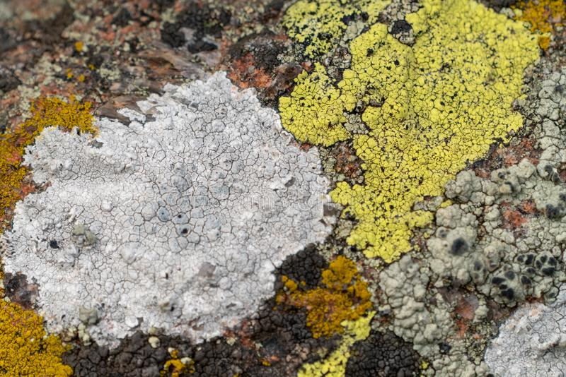 Diverse lichen mat royalty free stock images
