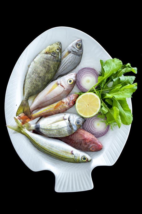 Diverse Mediterrane vissenbogue vissen, mul, bevlekten spinefoot, papegaaivissen op witte plaat stock fotografie
