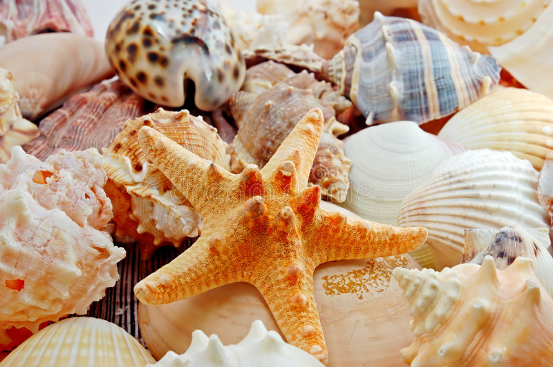 Diverse overzeese shells royalty-vrije stock foto's