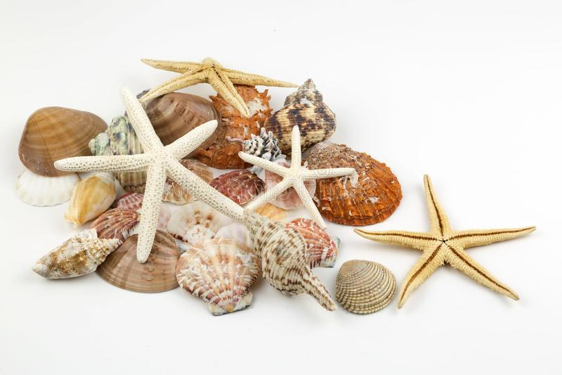 Diverse overzeese shells, concept, ontwerp, foto, achtergrond royalty-vrije stock foto's