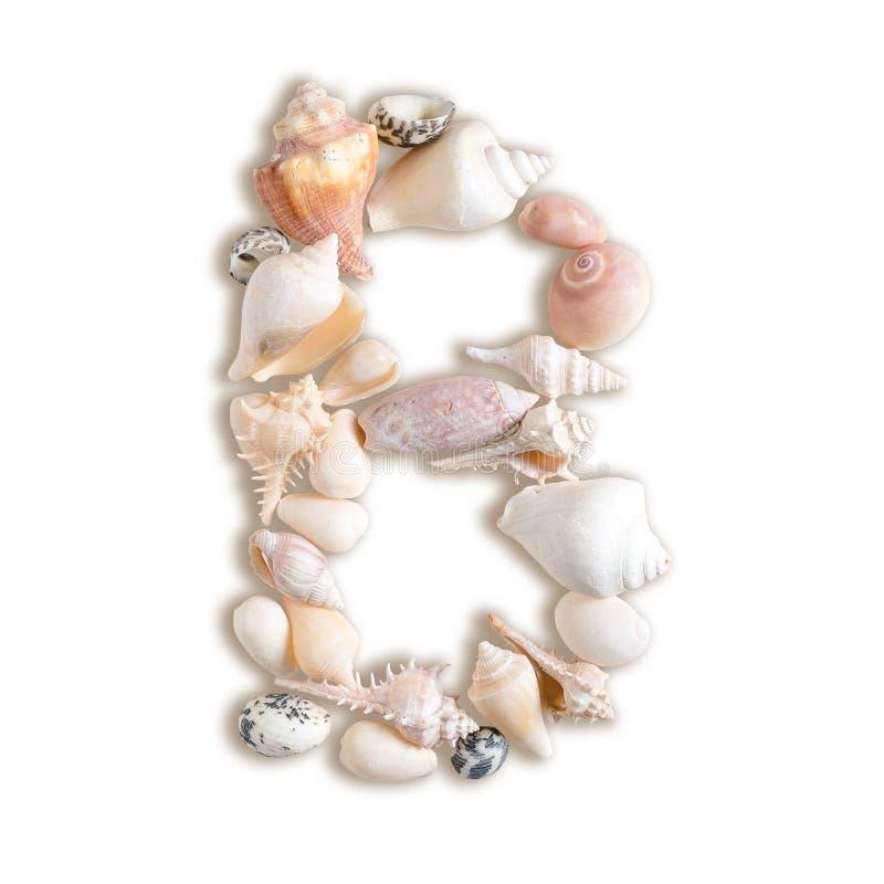 Diverse overzeese shells hoofdb op geïsoleerde witte achtergrond royalty-vrije stock foto
