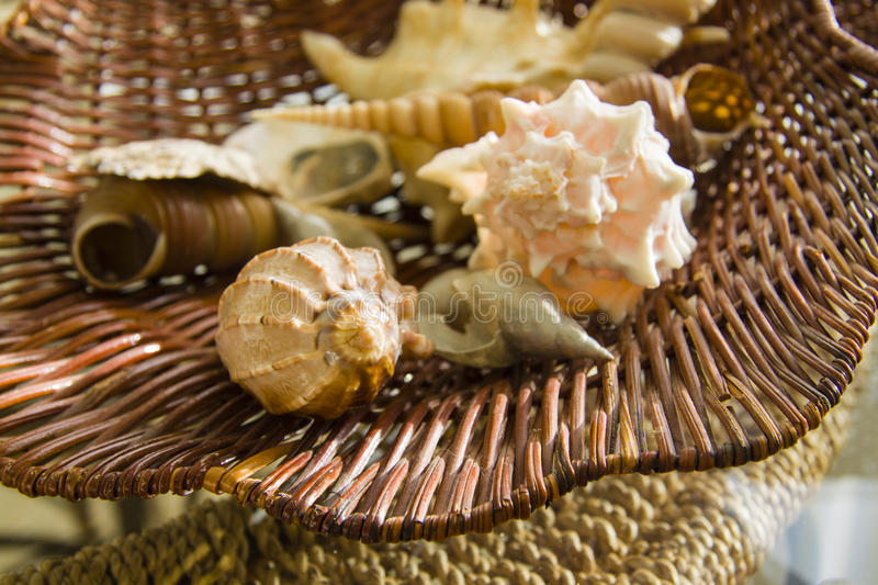 Diverse Overzeese shells in mand stock afbeelding