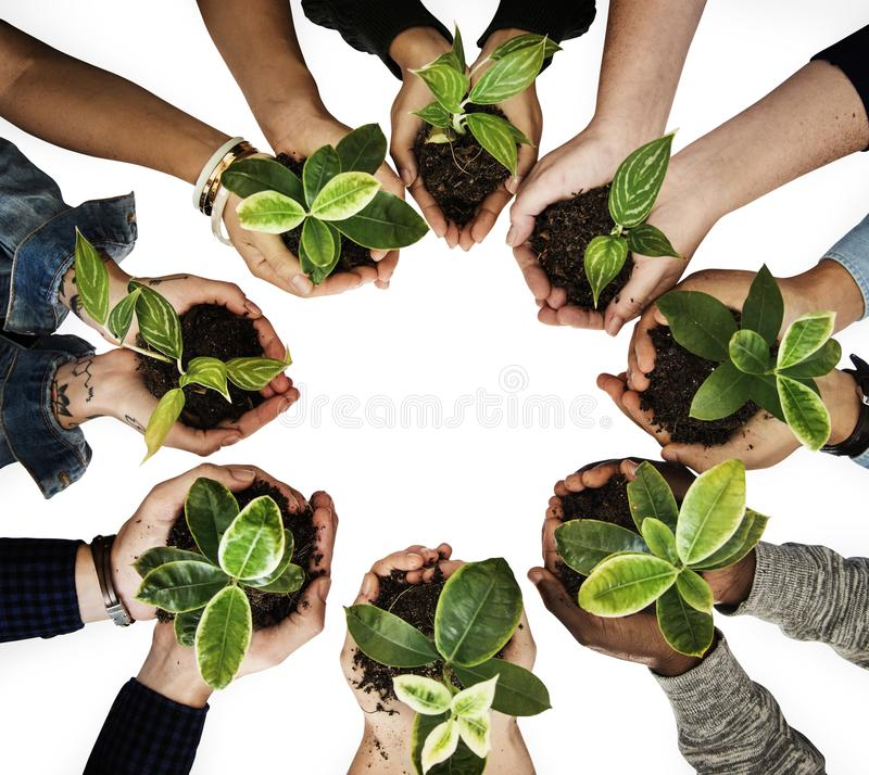 Diverse people holding plants on their hand royalty free stock images