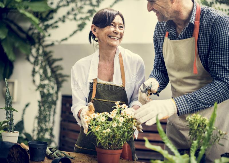 Diverse seniors planting flowers together stock photos