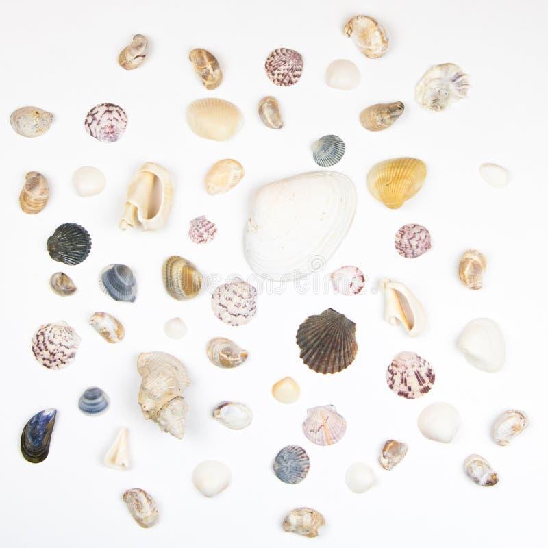 Diverse Shells die op Wit wordt geïsoleerd royalty-vrije stock afbeeldingen