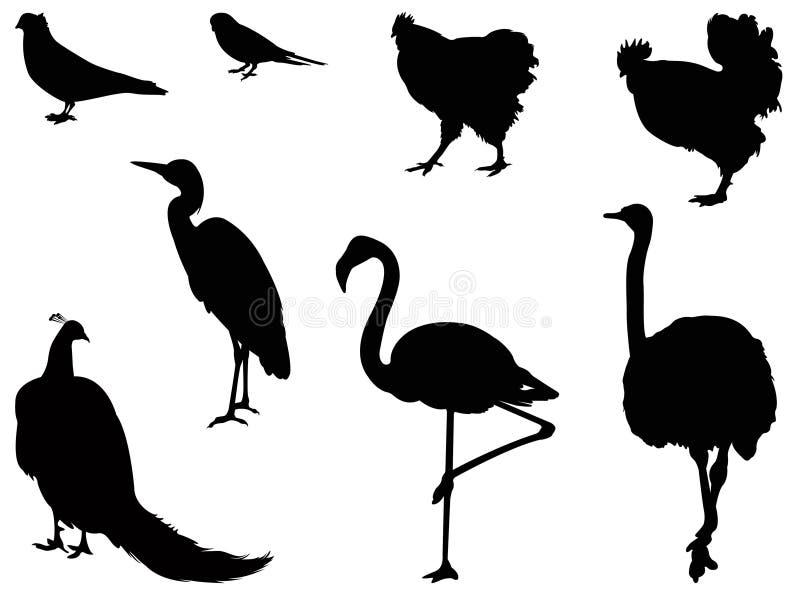 Diverse silhouette d'oiseaux illustration libre de droits