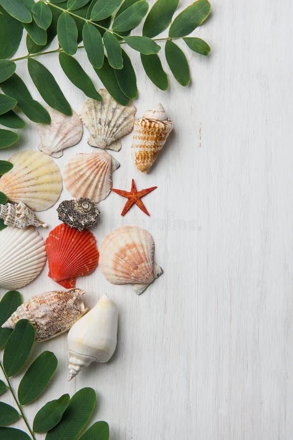 Diverse Soortenvormen van Mooie Vlakke Spiraalvormige de Boomtakken van de Overzeese Shells Stersprinkhaan met Groene Bladeren op stock afbeelding