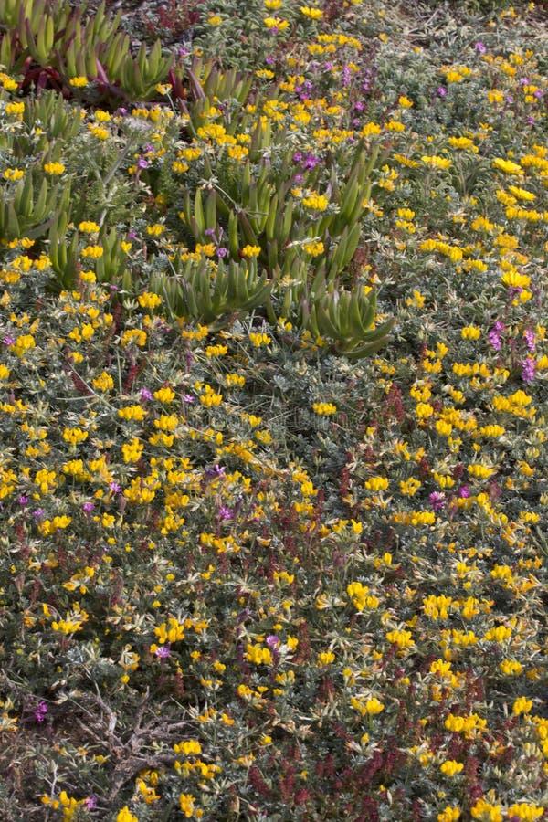 Diverse spring flora of Sagres stock image