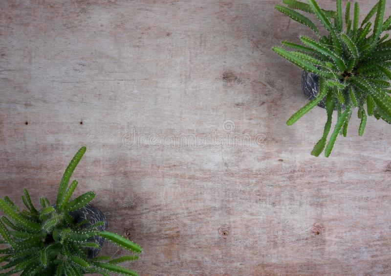 Diverse succulente installaties van catus/in steenpotten minihuisinstallaties op houten achtergrond met exemplaarruimte voor uw e royalty-vrije stock fotografie