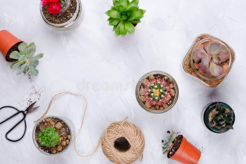 Diverse succulents en cactus op cementachtergrond stock foto