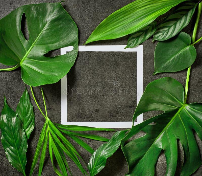 Diverse tropische bladeren en Witboekkader royalty-vrije stock afbeeldingen