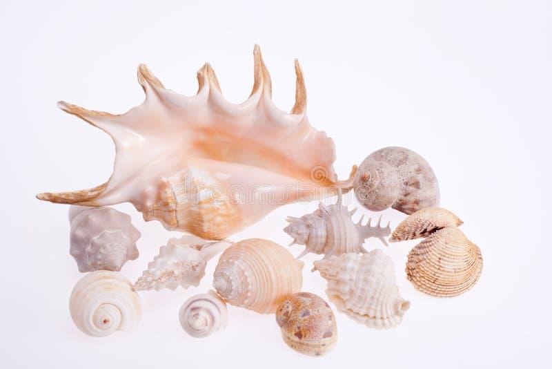 Diverse types van overzeese die shells op witte achtergrond wordt geïsoleerd royalty-vrije stock foto