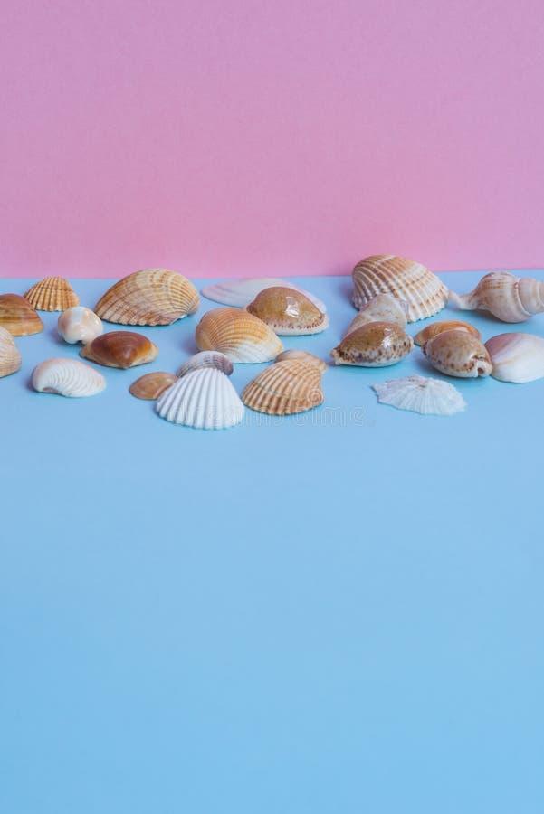 Diverse zeeschelpen op een lichtblauwe en roze achtergrond met diffe royalty-vrije stock foto