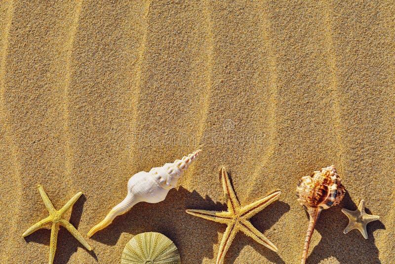 Diverse zeeschelpen op een zandig strand met exemplaarruimte royalty-vrije stock foto's