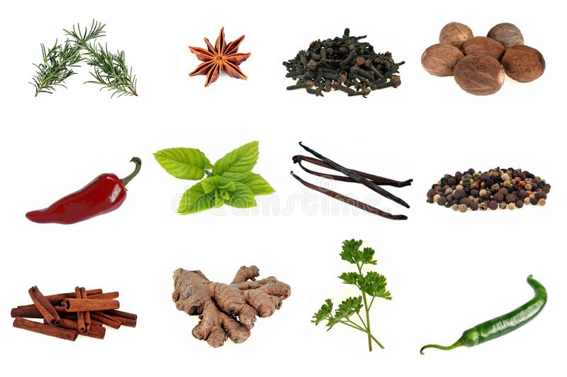 Diverses épices et plantes aromatiques sur un fond blanc photos libres de droits