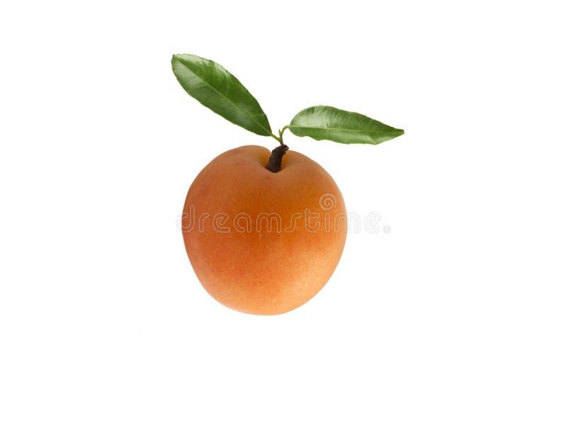 Diverses baies fraîches d'été Abricots mûrs avec l'espace de copie pour le texte Fruit sur le fond blanc Abricots avec des feuill images stock