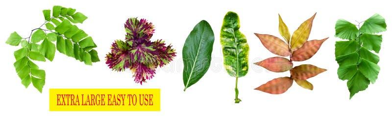 Diverses feuilles et fleurs avec le fond blanc, facile ? utiliser pour ?diter les besoins image libre de droits