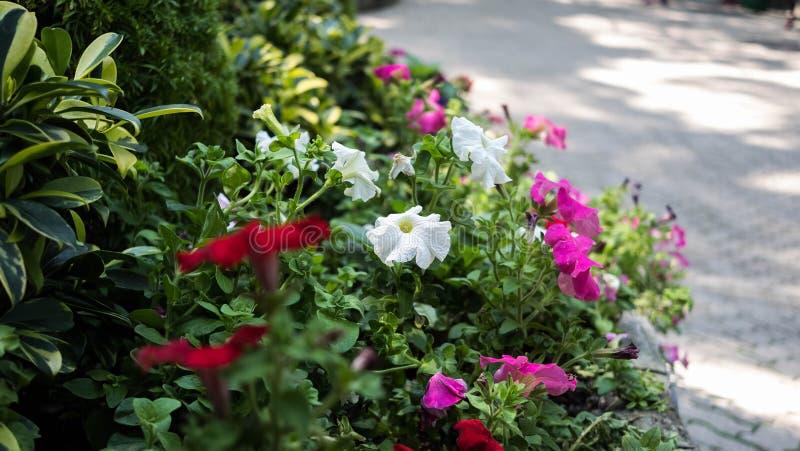 Diverses fleurs dans un jardin photo libre de droits