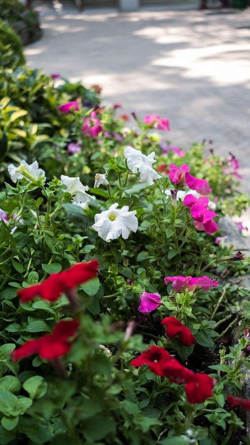 Diverses fleurs dans un jardin photographie stock libre de droits