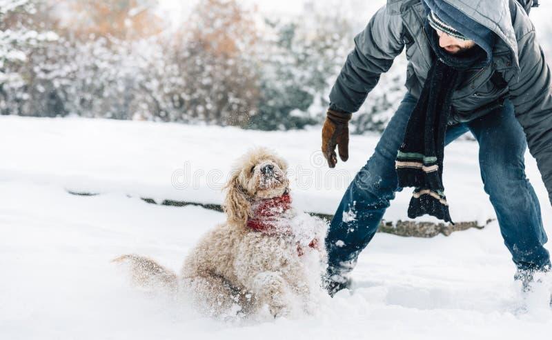 Diversión de la lucha de la bola de nieve con el animal doméstico y su dueño en la nieve invierno ho imagen de archivo