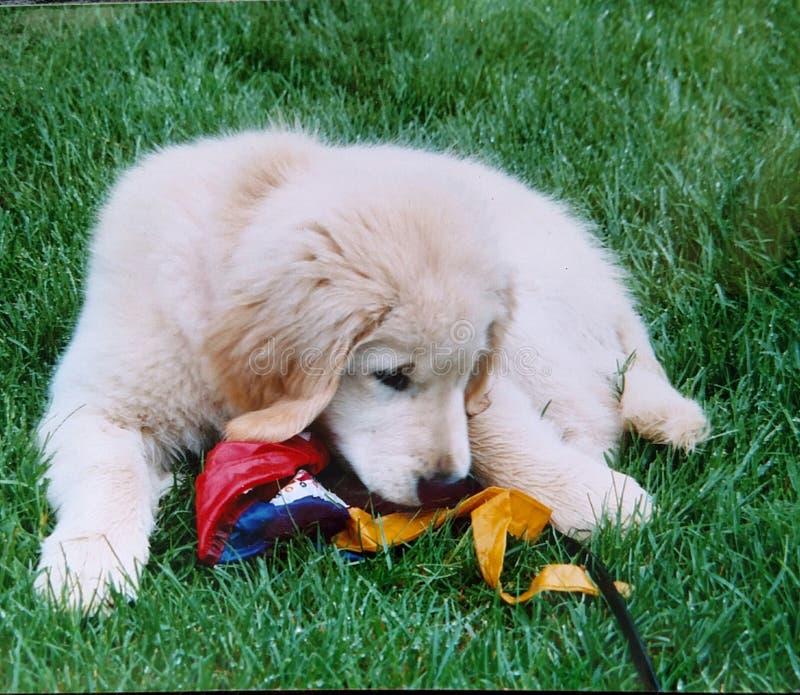 Diversión 2 del perrito imagen de archivo libre de regalías