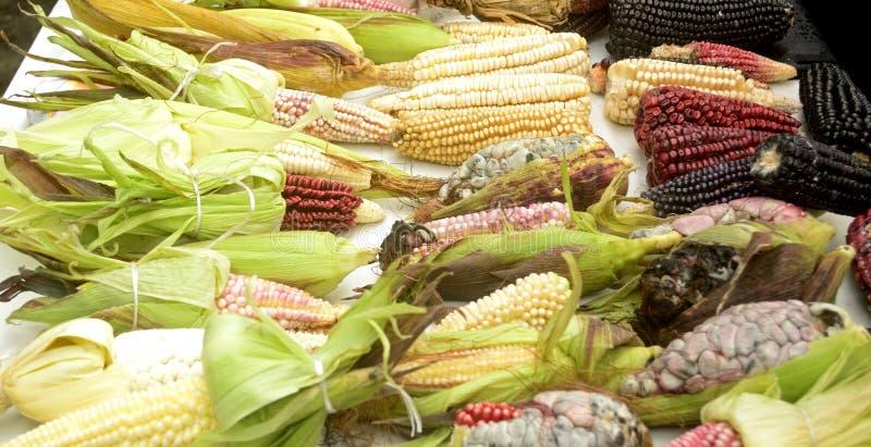 Diversidad mexicana del maíz, maíz blanco, maíz negro, maíz azul, maíz rojo, maíz salvaje y maíz amarillo en un mercado local en  imágenes de archivo libres de regalías