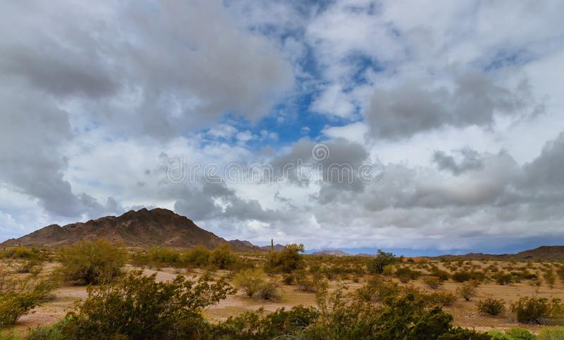 A diversidade da paisagem do deserto do Arizona com cacto do Saguaro foto de stock royalty free