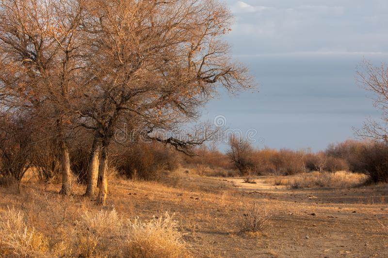 Diversifolia-Populus lizenzfreie stockfotografie
