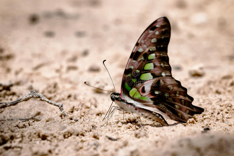 Diversità delle specie della farfalla fotografia stock